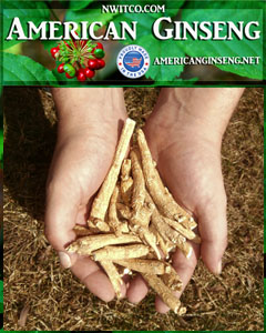 American Ginseng Roots